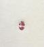 Argyle Oval Shape Diamond Fancy Pink  - 0.08 ct 5P